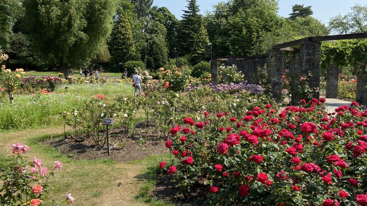Belfast Botanical Gardens Rose garden